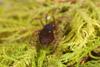 http://mczbase.mcz.harvard.edu/specimen_images/invertebrates/large/29210_Rakaia_florensis_11.jpg