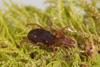 http://mczbase.mcz.harvard.edu/specimen_images/invertebrates/large/29210_Rakaia_florensis_12.jpg