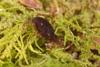 http://mczbase.mcz.harvard.edu/specimen_images/invertebrates/large/29210_Rakaia_florensis_14.jpg