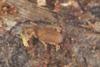 http://mczbase.mcz.harvard.edu/specimen_images/invertebrates/large/29210_Rakaia_florensis_24.jpg