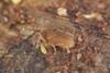 http://mczbase.mcz.harvard.edu/specimen_images/invertebrates/large/29210_Rakaia_florensis_25.jpg