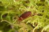 http://mczbase.mcz.harvard.edu/specimen_images/invertebrates/large/29210_Rakaia_florensis_4.jpg