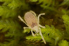 http://mczbase.mcz.harvard.edu/specimen_images/invertebrates/large/29554_Aoraki_longitarsa_12.jpg