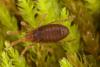 http://mczbase.mcz.harvard.edu/specimen_images/invertebrates/large/29554_Aoraki_longitarsa_9.jpg