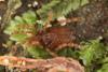 http://mczbase.mcz.harvard.edu/specimen_images/invertebrates/large/29572_Aoraki_inerma_12.jpg