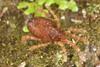 http://mczbase.mcz.harvard.edu/specimen_images/invertebrates/large/29572_Aoraki_inerma_14.jpg