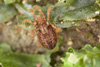 http://mczbase.mcz.harvard.edu/specimen_images/invertebrates/large/29572_Aoraki_inerma_2.jpg