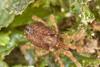 http://mczbase.mcz.harvard.edu/specimen_images/invertebrates/large/29572_Aoraki_inerma_6.jpg