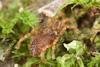 http://mczbase.mcz.harvard.edu/specimen_images/invertebrates/large/29572_Aoraki_inerma_9.jpg