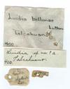 http://mczbase.mcz.harvard.edu/specimen_images/invertebrates/large/400_Luidia_bellonae_1.jpg