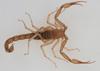 http://mczbase.mcz.harvard.edu/specimen_images/invertebrates/large/46973_Vietbocap_lao_10.jpg