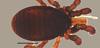 http://mczbase.mcz.harvard.edu/specimen_images/invertebrates/large/53180_Microgovia_chenepau_1.jpg