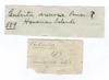 http://mczbase.mcz.harvard.edu/specimen_images/invertebrates/large/589_Culcita_arenosa_1.jpg