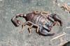 http://mczbase.mcz.harvard.edu/specimen_images/invertebrates/large/74435_Scoropiones_4.jpg