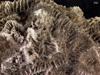 http://mczbase.mcz.harvard.edu/specimen_images/invertebrates/large/CNID-144540_Diploria_sp_1.jpg