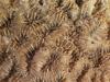 http://mczbase.mcz.harvard.edu/specimen_images/invertebrates/large/CNID-5122_Favia_fragum_1.jpg