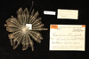 http://mczbase.mcz.harvard.edu/specimen_images/invertebrates/large/MCZ_CRI_551_Lamprometra_palmata_1.jpg
