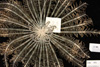 http://mczbase.mcz.harvard.edu/specimen_images/invertebrates/large/MCZ_CRI_551_Lamprometra_palmata_2.jpg