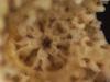 http://mczbase.mcz.harvard.edu/specimen_images/invertebrates/large/OPH_2631_Ophiothela_Danae_2.jpg