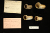 http://mczbase.mcz.harvard.edu/specimen_images/malacology/large/134767_Marisa_cornuarietis_3.jpg