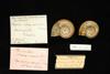http://mczbase.mcz.harvard.edu/specimen_images/malacology/large/146122_Marisa_cornuarietis_1.jpg