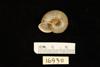 http://mczbase.mcz.harvard.edu/specimen_images/malacology/large/169311_Helix_procumbens_3.jpg