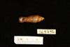 http://mczbase.mcz.harvard.edu/specimen_images/malacology/large/169456_Clausilia_vespa_2.jpg