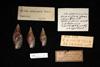 http://mczbase.mcz.harvard.edu/specimen_images/malacology/large/211750_Mitra_adansonni_1.jpg