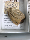 http://mczbase.mcz.harvard.edu/specimen_images/malacology/large/342558_Hiatella_arctica_label_1.jpg