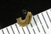 http://mczbase.mcz.harvard.edu/specimen_images/malacology/large/389029_Alderia_modesta_08.jpg