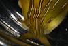 http://mczbase.mcz.harvard.edu/specimen_images/malacology/large/389075_Phyllaplysia_taylori_3.jpg