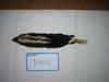 http://mczbase.mcz.harvard.edu/specimen_images/mammalogy/large/10116_Conepatus_semistriatus_trichurus_d.jpg