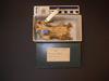 http://mczbase.mcz.harvard.edu/specimen_images/mammalogy/large/10169_Choloepus_hoffmanni_hv.jpg