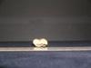 http://mczbase.mcz.harvard.edu/specimen_images/mammalogy/large/10733_Gazella_dorcas_astragalus_3.jpg
