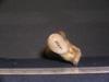 http://mczbase.mcz.harvard.edu/specimen_images/mammalogy/large/10733_Gazella_dorcas_femur_4.jpg