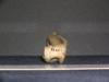 http://mczbase.mcz.harvard.edu/specimen_images/mammalogy/large/10733_Gazella_dorcas_humerus_4.jpg