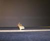 http://mczbase.mcz.harvard.edu/specimen_images/mammalogy/large/10733_Gazella_dorcas_tibia_4.jpg