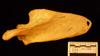 http://mczbase.mcz.harvard.edu/specimen_images/mammalogy/large/10736_Pan_troglodytes_scap-pos.jpg