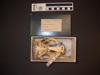 http://mczbase.mcz.harvard.edu/specimen_images/mammalogy/large/12337_Choloepus_hoffmanni_hv.jpg