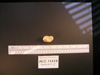 http://mczbase.mcz.harvard.edu/specimen_images/mammalogy/large/13237_Gazella_granti_notata_astragalus_4.jpg
