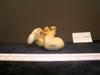 http://mczbase.mcz.harvard.edu/specimen_images/mammalogy/large/13237_Gazella_granti_notata_femur_3.jpg