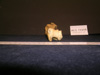 http://mczbase.mcz.harvard.edu/specimen_images/mammalogy/large/13237_Gazella_granti_notata_humerus_4.jpg