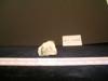 http://mczbase.mcz.harvard.edu/specimen_images/mammalogy/large/13237_Gazella_granti_notata_metacarpal_4.jpg