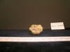 http://mczbase.mcz.harvard.edu/specimen_images/mammalogy/large/13237_Gazella_granti_notata_radius_3.jpg