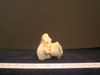 http://mczbase.mcz.harvard.edu/specimen_images/mammalogy/large/13237_Gazella_granti_notata_tibia_3.jpg