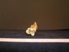 http://mczbase.mcz.harvard.edu/specimen_images/mammalogy/large/13237_Gazella_granti_notata_tibia_4.jpg