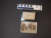 http://mczbase.mcz.harvard.edu/specimen_images/mammalogy/large/1437_Bradypus_variegatus_hv.jpg