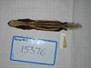 http://mczbase.mcz.harvard.edu/specimen_images/mammalogy/large/15376_Poecilogale_albinucha_albinucha_d.jpg