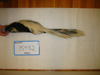 http://mczbase.mcz.harvard.edu/specimen_images/mammalogy/large/15482_Mephitis_mephitis_varians_l.jpg