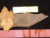 http://mczbase.mcz.harvard.edu/specimen_images/mammalogy/large/1579_Lasiurus_borealis_borealis_d.jpg